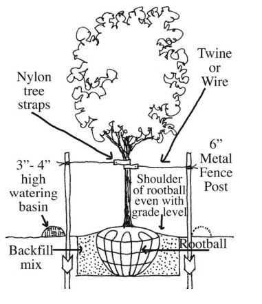 B B Trees Planting Guide